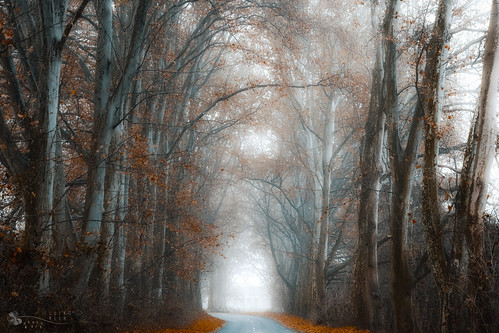 my misty road | by ildikoneer