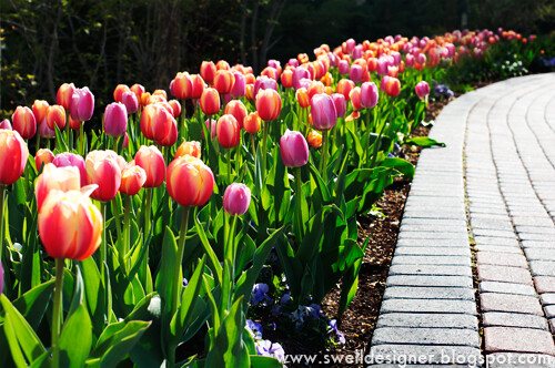 tulip-gardens-thanksgiving-point-2 | by swelldesigner