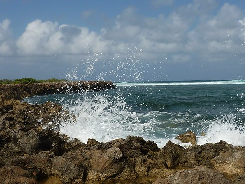 turtle bay splash | by pianomom2001