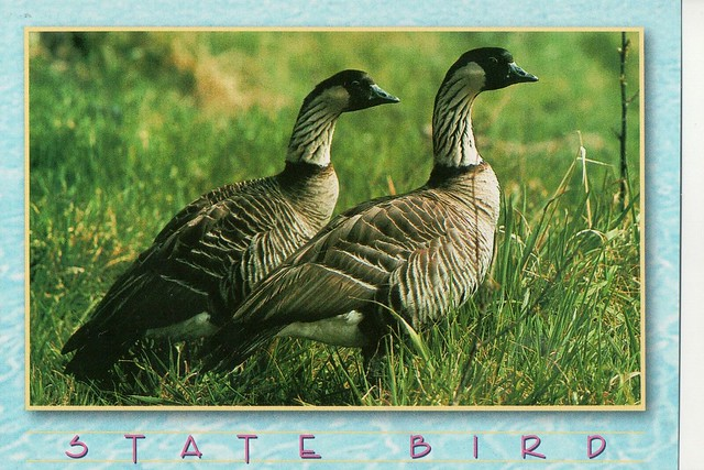 Hawaiian state birds
