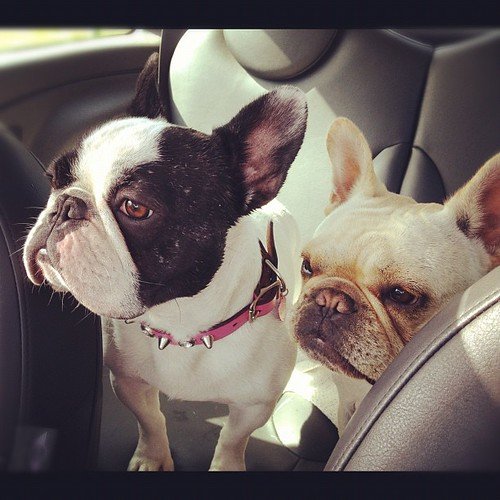 Backseat drivers | by Izznit
