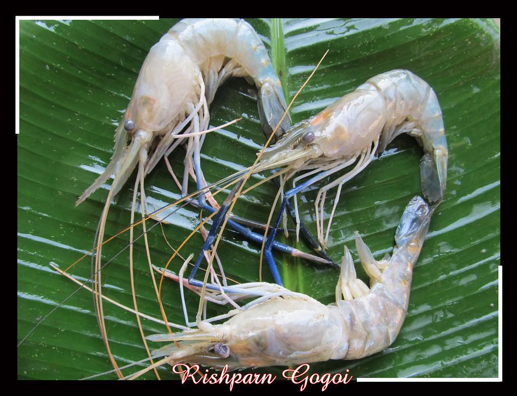 Prone Fish Rishparn Gogoi Flickr