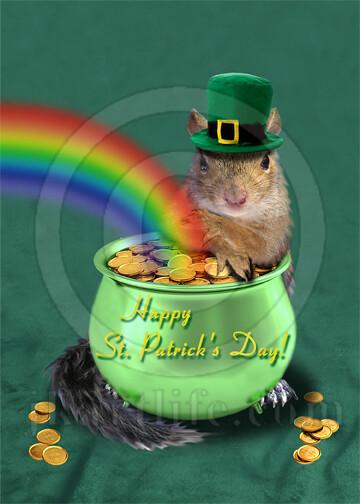 st patrick u0026 39 s day squirrel 826883