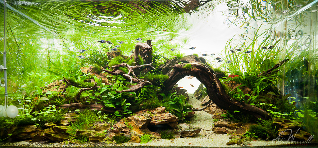 90x45x45cm Planted Dragon Stone Aquascape Full Frontal Sho Flickr
