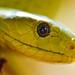 Portrait of a snake