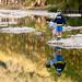 Pedernales River Reflections