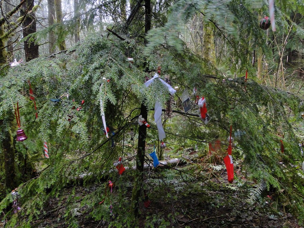 Year round christmas tree near paw print connector trail for Year round christmas tree