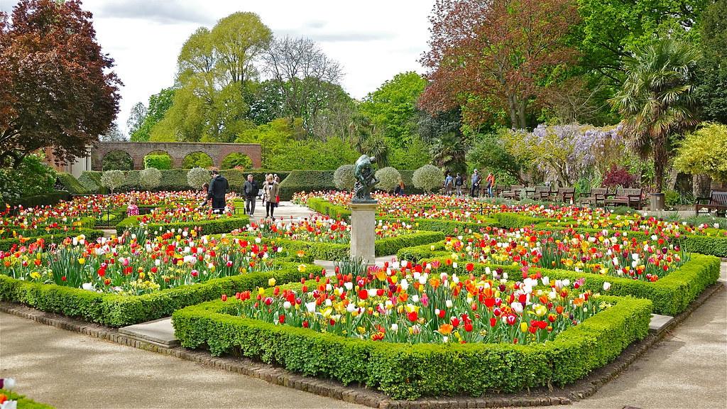 tulips in the dutch garden holland park london april 20 flickr. Black Bedroom Furniture Sets. Home Design Ideas