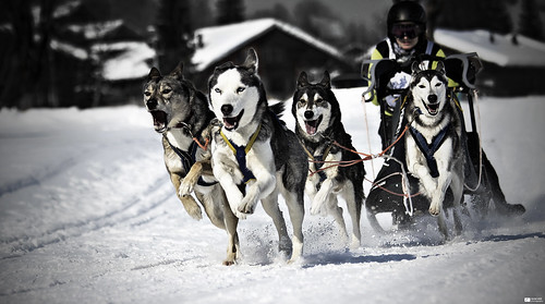 Mushing [Explore 2012-02-14, Frontpage] | by Daniel Wildi Photography