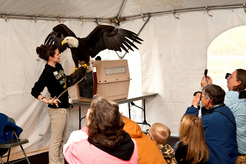Patriot the Eagle spreads her wings at Kaskaskia Lock & Dam | by USACE HQ