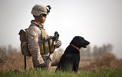 Dogs of war: Friends and saviors of Marines in Afghanistan [Image 5 of 9] | by DVIDSHUB
