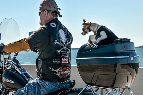 Harley Davidson Dog Collar Uk