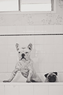 Sid and Lola - Bath 10 | by Katie Takes A Picture