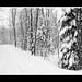 Fit Strip snow storm panorama_Web_BWa_contrast boost_lrg blk border