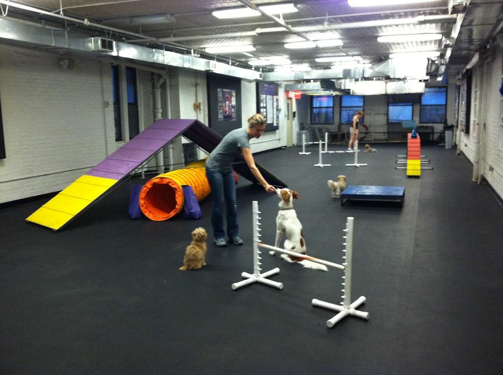 Dog Agility Training Petaluma