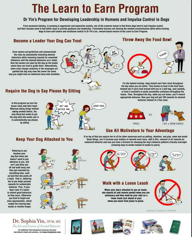 Dog Training Tips Fetch