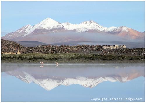 flamingos at Lauca Park, Putre | by www.TerraceLodge.com
