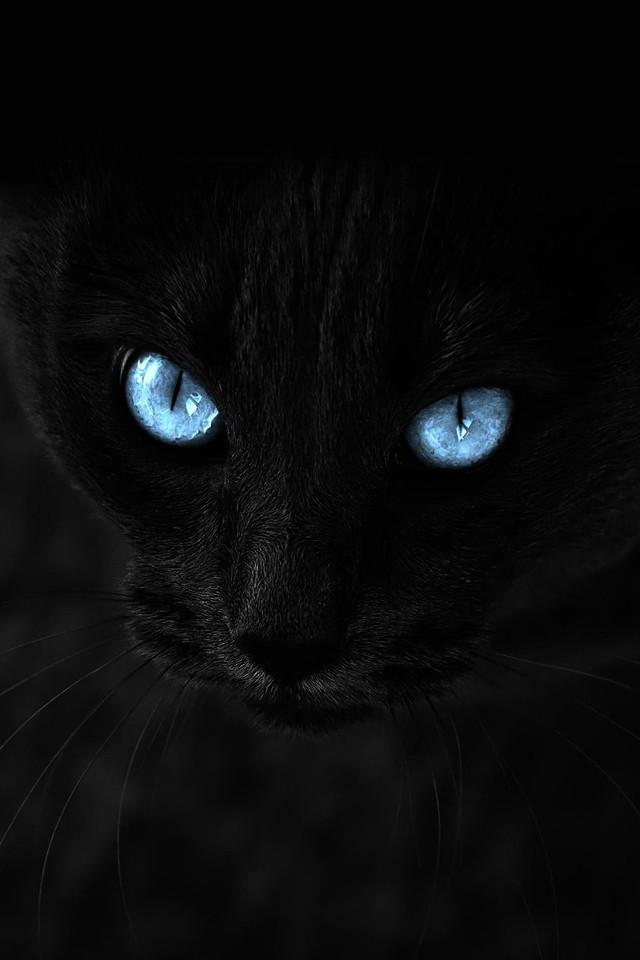 Cat S Eyes Episode  En Francais