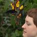 Wisley Butterfly House