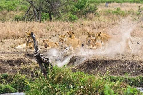 Africa 2011-32.jpg   by Jackals Photography