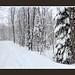 Fit Strip snow storm panorama_Web_bark color border