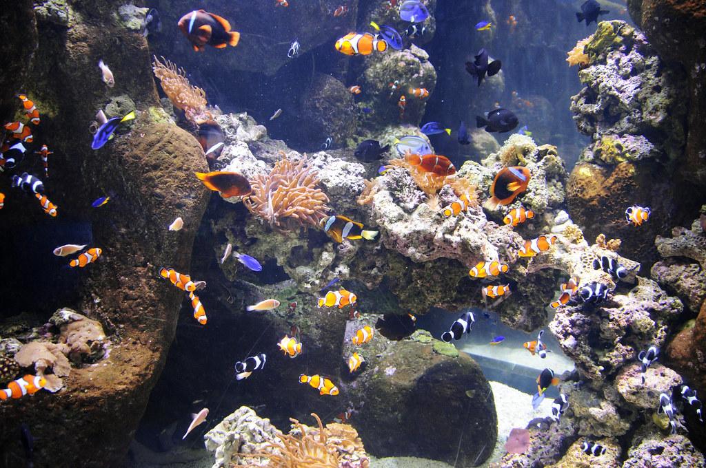 Long Beach Aquarium Membership Discount