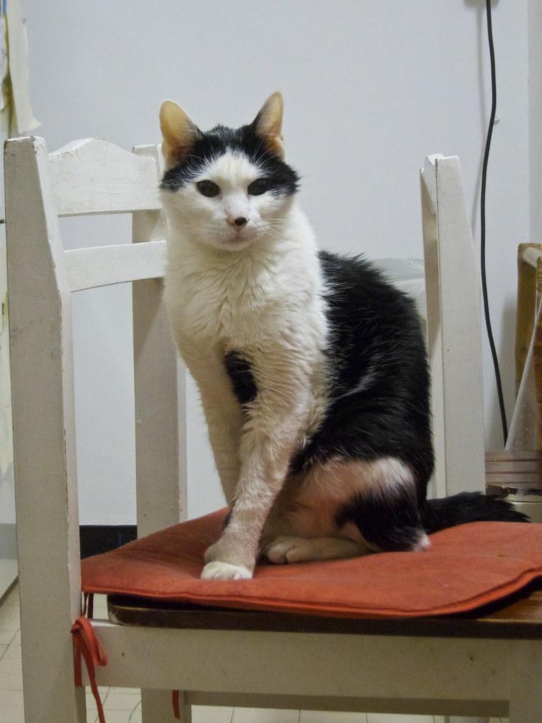 Chat en forme de chat assis sur une chaise on s 39 en for Assis sur une chaise