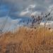 Meadowlands / Secaucus 5