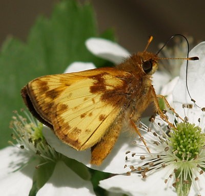 Zabulon Skipper | by summerazure