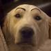 A seriuos dog