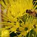 Bee in the bush  6/31