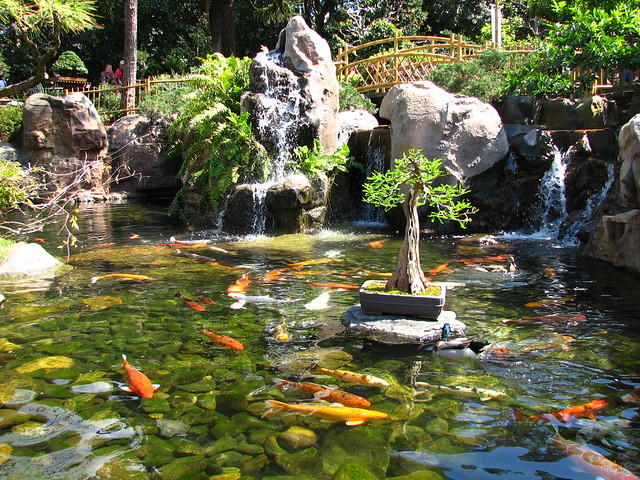 Epcot japan koi pond flickr photo sharing for Koi pond japan