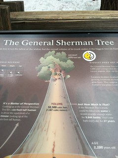 RE: General Sherman Tree infographic | by getswipp