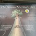 RE: General Sherman Tree infographic