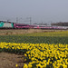 NMBS 2835 with Olympic Benelux train at Warmond, March 24, 2012