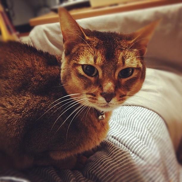[url=https://www.flickr.com/photos/... 甘えんぼ #cat