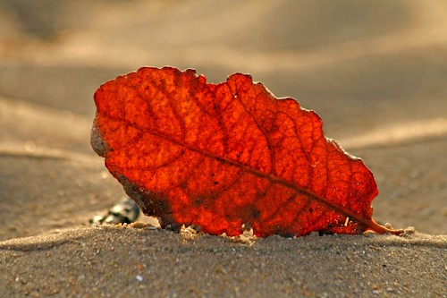 2012: Leaf Year | by RoystonVasey