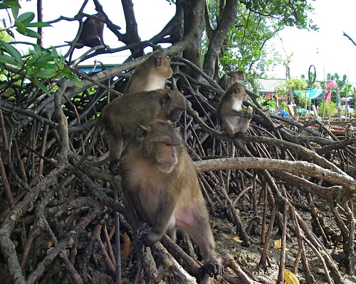 Monkeys | by Blue Lotus