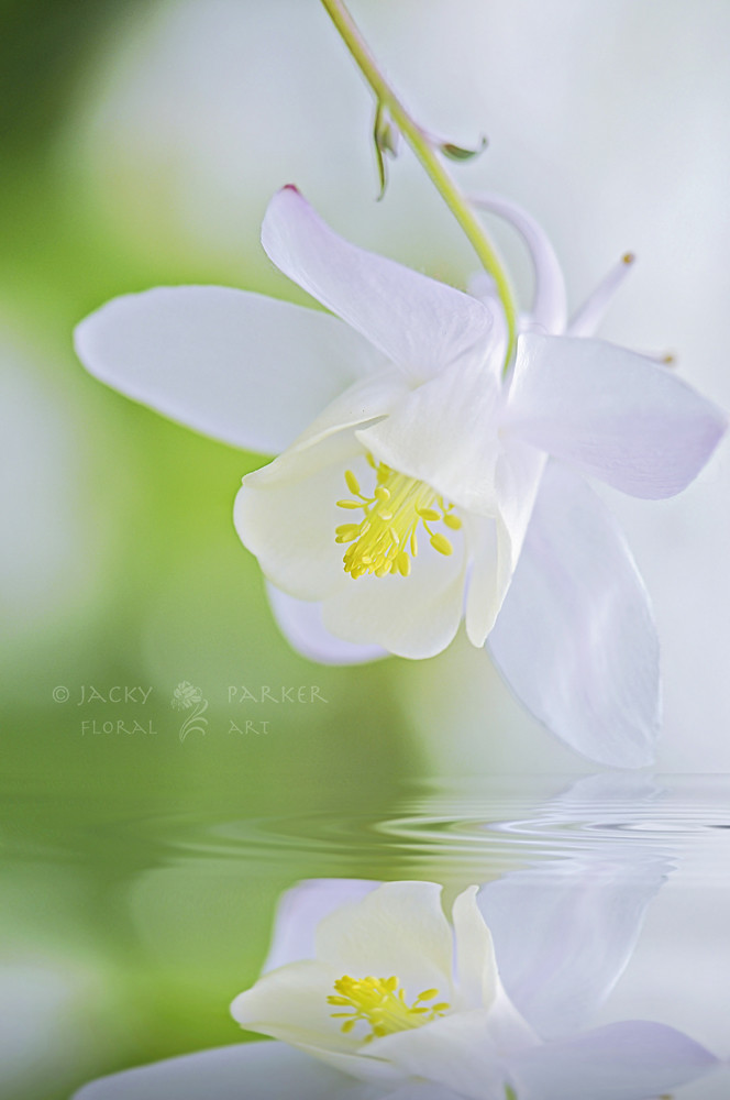 Photograph Tranquil Spring by Jacky Parker