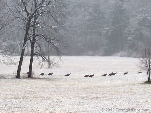 Wild turkeys in the snowy hayfield | by Farmgirl Susan