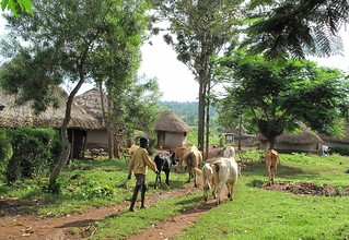 Typical mixed crop-livestock farming of western Kenya | by International Livestock Research Institute