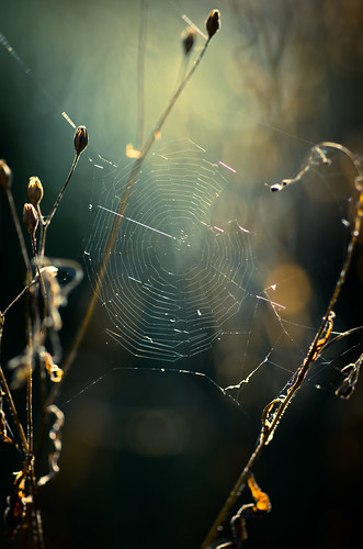 Spider's hideout | by Flick Vlooi