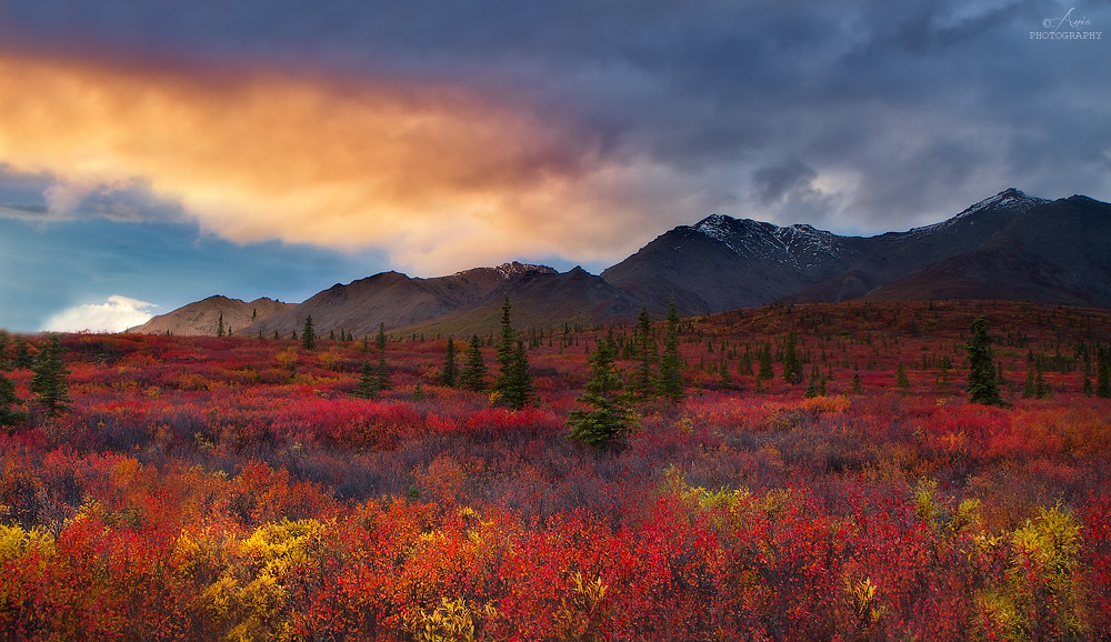 Alaska >> Land of Gold & Fire | Denali sunset, Alaska © All rights res… | Ania Tuzel Photography | Flickr