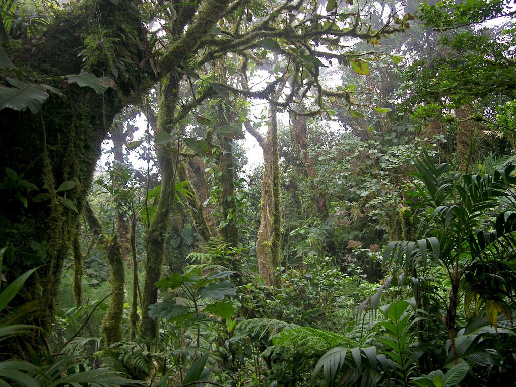 Reserva Monteverde High Altitude Cloud Forest | Cool mists ...