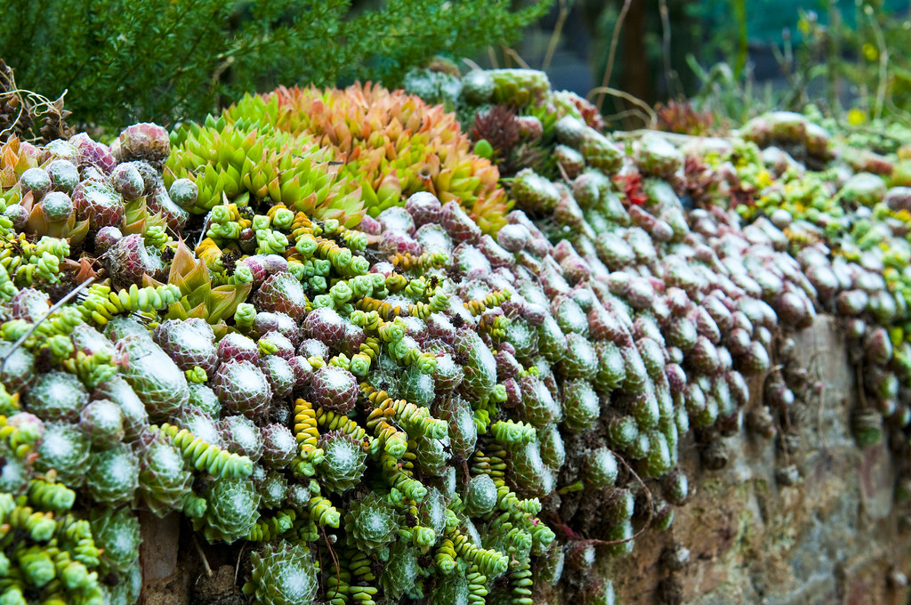 Succulents Cacti From Graaf Reinet South Africa