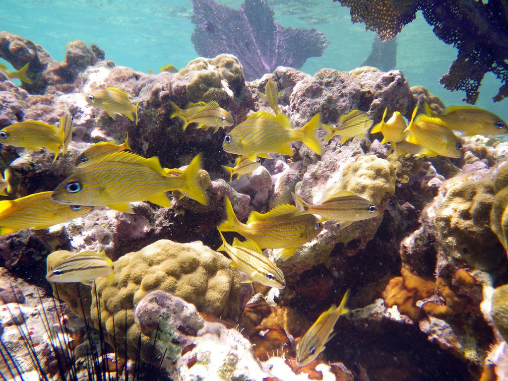 Scuba Sites in the United States Virgin Islands