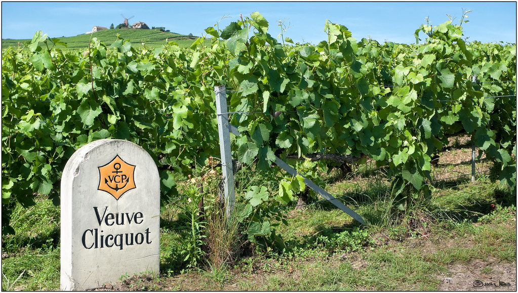 The Veuve Clicquot Vineyards In Verzenay Champagne Flickr