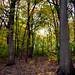 UW-Madison Arboretum - 10-28-2011b