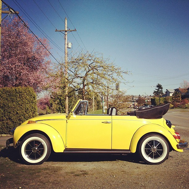 Punch Buggy Volkswagen >> Punch buggy yellow, no returns #convertible #volkswagen #b ...