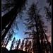 Foresta Nera